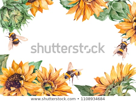 sunflower and bumblebee Stock photo © Paha_L