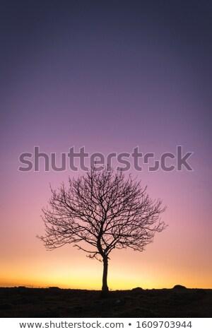 setting sun tree silhouettes stock photo © sirylok