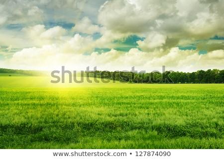 Sunshine Spring Cloud Landscape Stock photo © Serg64