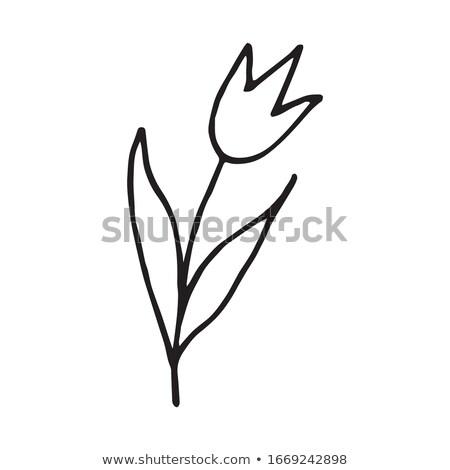 preto · tulipa · mãos · isolado · céu · primavera - foto stock © natalinka