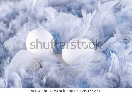 Bianco uova soft luce Foto d'archivio © Elegies