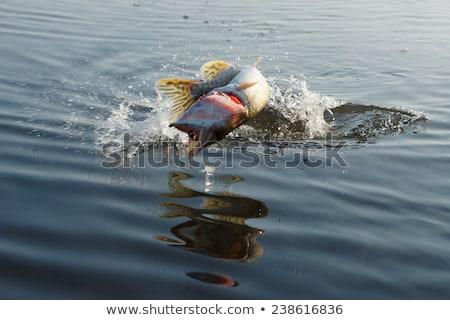 Fishing the Rapids Stock photo © tab62