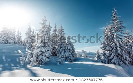 nieve · cubierto · pino · árboles · cielo · azul - foto stock © elinamanninen
