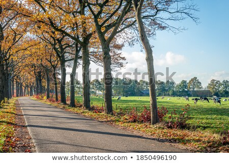 Ackerland herbstlich Bäume neue Nutzpflanzen zunehmend Stock foto © sarahdoow