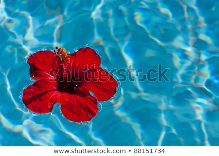 Azul hibisco flor reflexiones diseno jardín Foto stock © haraldmuc