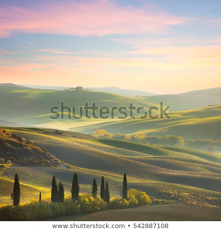 Vineyards on the hills in autumn in Italy. Stock photo © rglinsky77