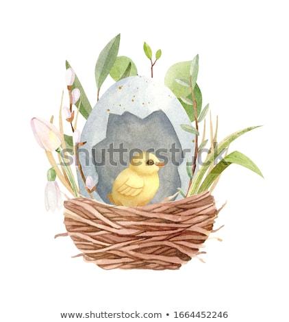 Stockfoto: Easter · egg · nest · geïsoleerd · witte · Pasen · verf