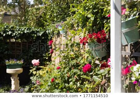belo · roxo · violeta · flores · vaso · branco - foto stock © julietphotography