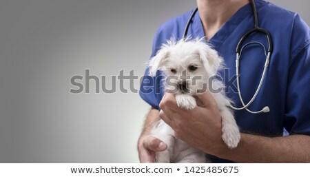 ветеринар щенков женщины клинике женщину рабочих Сток-фото © wavebreak_media