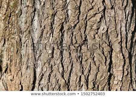naturalnych · kory · szczegół · full · frame · streszczenie · drzewo - zdjęcia stock © prill