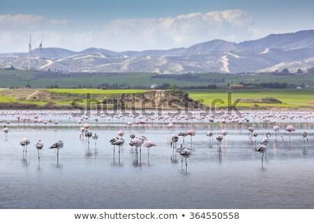 塩 湖 キプロス 色 空 水 ストックフォト © Kirill_M