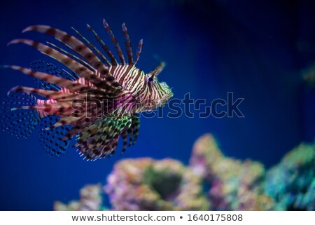 ocean scene with lion fish underwater stock photo © bluering