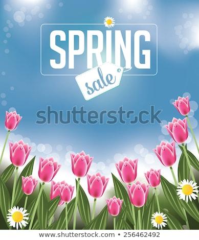 dzień · kobiet · sprzedaży · projektu · tulipan · kwiat · różowy - zdjęcia stock © beholdereye