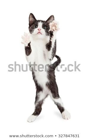 áll · fekete · macska · sziluett · művészet · fehér · állat - stock fotó © bluering