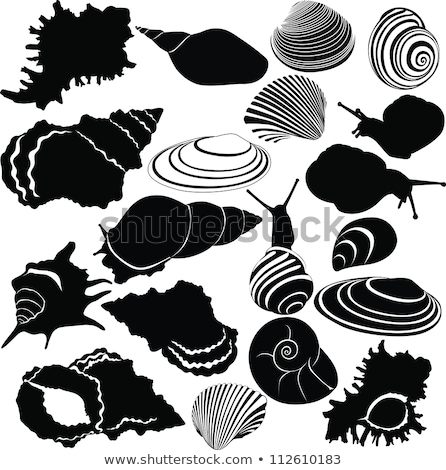 Shell isolated. Underwater world fauna Vector illustration Stock photo © popaukropa
