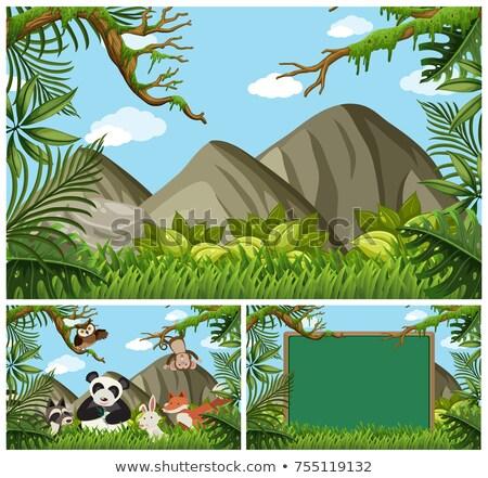 Bordo modello panda boschi illustrazione natura Foto d'archivio © colematt