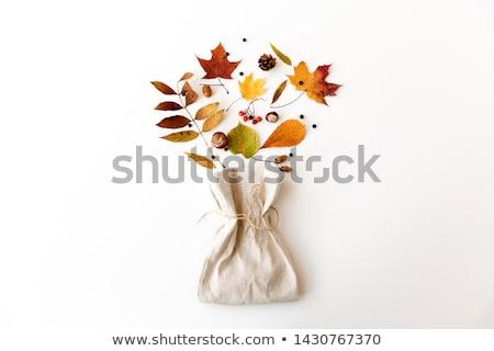 őszi levelek bogyók táska természet évszak különböző Stock fotó © dolgachov