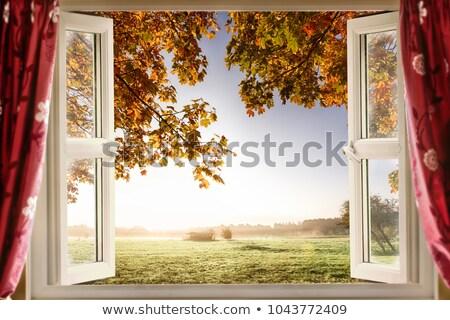 окна сельский дома плющ стены лист Сток-фото © zurijeta