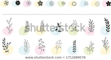 Collection Of Bunches Of Flowers And Leaves With Paper Stock photo © adamson