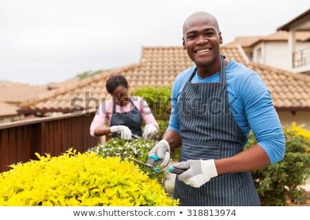 man in his garden Stock photo © photography33