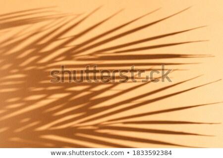 Orange sand Stock photo © emattil