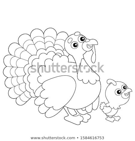 colours of turkey stock photo © perysty