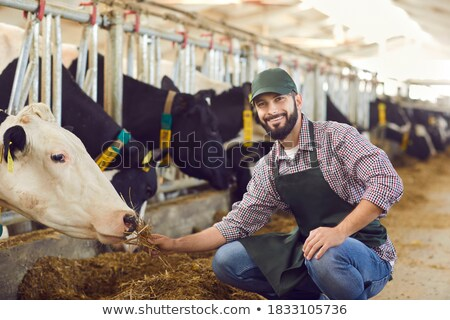 a breeder with cows Stock photo © photography33