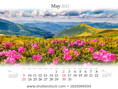 New Spring Rhododendron in pink  Stock photo © tab62