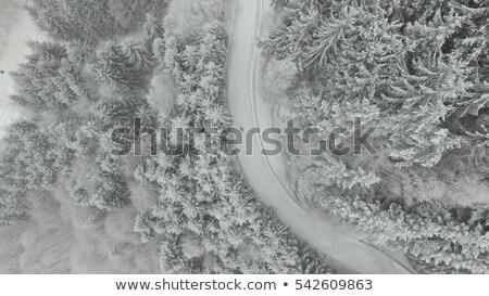 Foto stock: Inglês · inverno · paisagem · escuro · linha · árvores