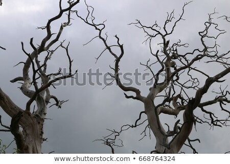 Toter Baum Wald beliebt blau Berge Stock foto © meinzahn