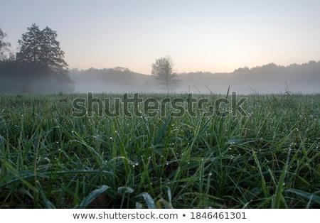Gras gedekt dauw groen gras voorjaar blad Stockfoto © All32