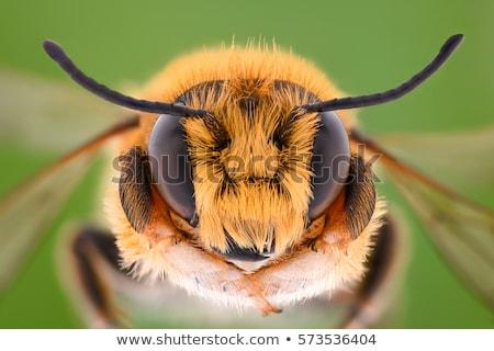 Rovar méh közelkép fából készült természet háttér Stock fotó © OleksandrO