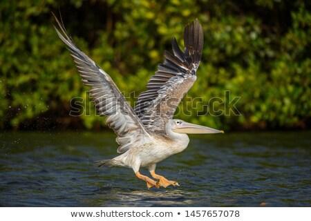 Сток-фото: розовый · воды · птиц · плаванию · животного
