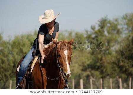 equitação · cavalo · verão · campo · retrato · belo - foto stock © artfotodima