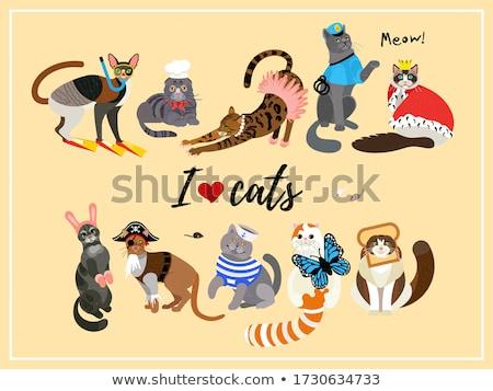 dressed bengal kitten Stock photo © cynoclub
