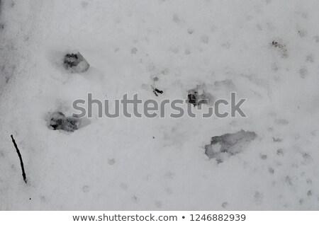 écureuil bois illustration sourire nature signe Photo stock © adrenalina