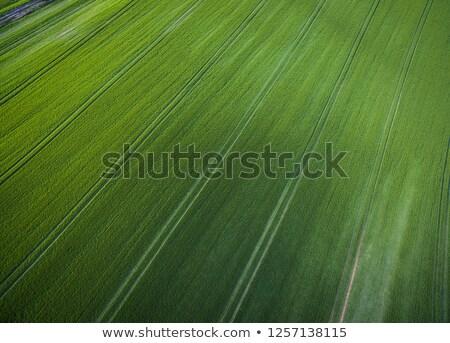 au-dessus · image · luxuriante · vert - photo stock © lightpoet
