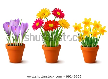 pink spring flower in the pot stock photo © anna_om
