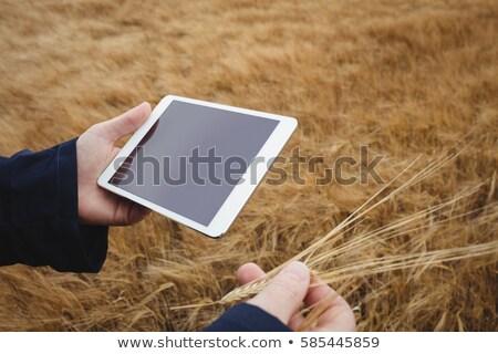 çiftçi dijital tablet kulaklar buğday Stok fotoğraf © wavebreak_media
