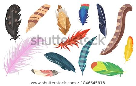 Colorido papagaios grupo desenho animado ilustração aves Foto stock © izakowski