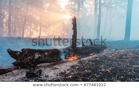 Burnt Trees Stock photo © craig