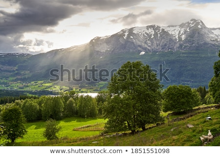 valley in norway in changeful weather Stock photo © gewoldi
