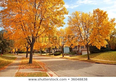 Suburban Sidewalk in Autumn Stock photo © lisafx