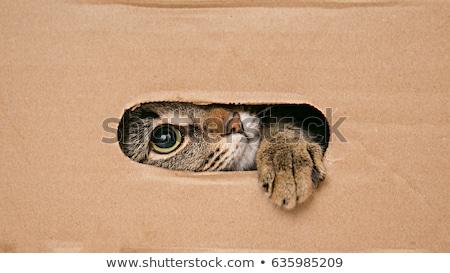 猫 · 外に · 穴 · ボックス · 頭 · 足 - ストックフォト © pterwort