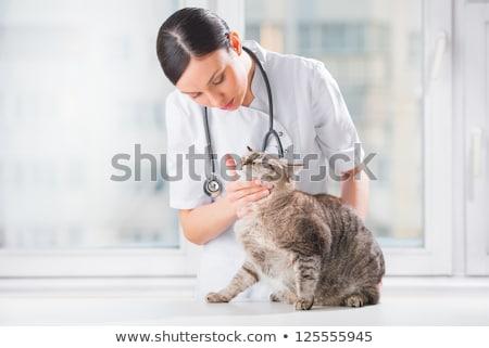 Stock foto: Veterinarian Examining Teeth Of A Cat While Doing Checkup At Cli