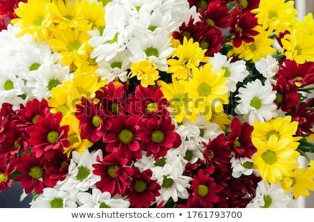 カラフル 菊 花束 素朴な 木製 花 ストックフォト © inxti