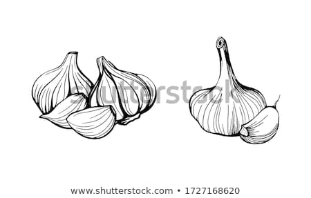 Heads of garlic Stock photo © Supertrooper