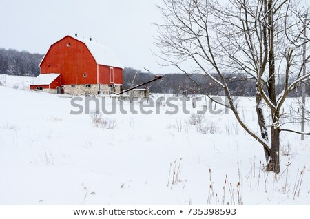 Barn on Snowy Field Stock photo © ajn