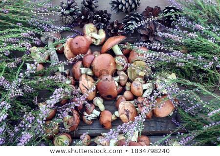 съедобный · грибы · плетеный · корзины · завода · растительное - Сток-фото © oleksandro