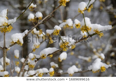 цветения весны время цветок лет листьев Сток-фото © mady70